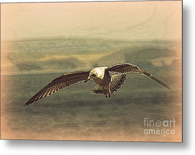 Young Gull Metal Print by Linsey Williams