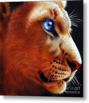 Young Lion Metal Print by Jurek Zamoyski