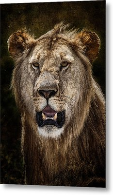 Metal Print featuring the photograph Young Male Lion Texture Blend by Mike Gaudaur