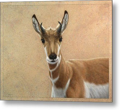 Young Pronghorn Metal Print by James W Johnson