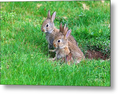 Metal Print featuring the photograph Young Rabbits by Nick  Biemans