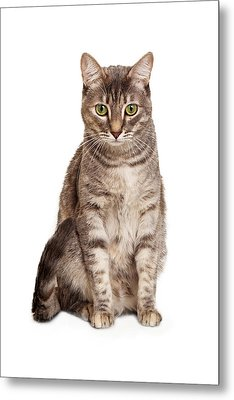 Young Tabby Cat Sitting Looking Down Metal Print