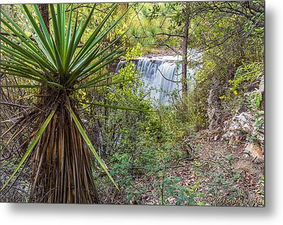 Metal Print featuring the photograph Yucca And Waterfall by Beverly Parks