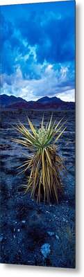 Yucca Flower In Red Rock Canyon Metal Print by Panoramic Images