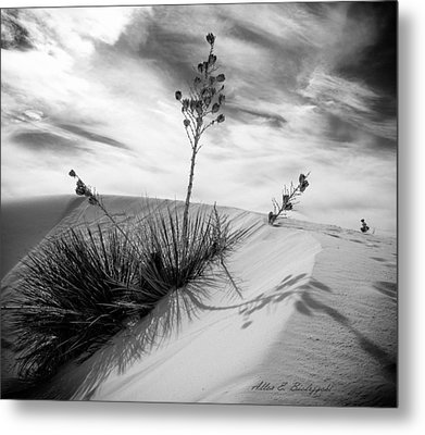 Yucca In White Sand Metal Print