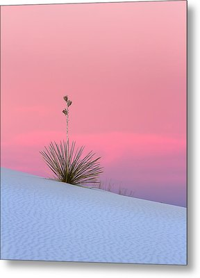 Yucca On Pink And White Metal Print