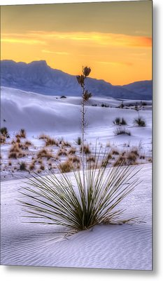 Metal Print featuring the photograph Yucca On White Sand by Kristal Kraft