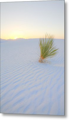 Metal Print featuring the photograph Yucca Plant At White Sands by Alan Vance Ley