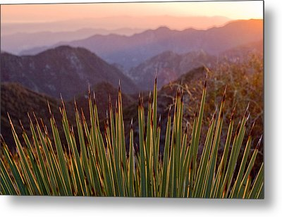 Yucca Spikes Metal Print by Adam Pender