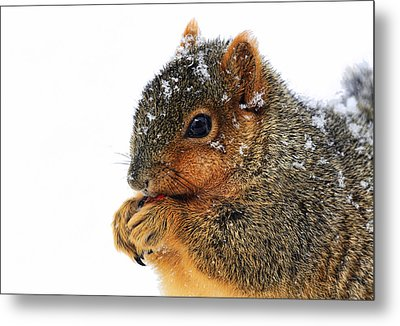 Yummy Metal Print by Marcia Colelli