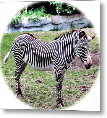 Metal Print featuring the photograph Zebra 1 by Dawn Eshelman