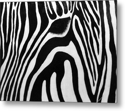 Zebra 13 Metal Print by Jane Biven
