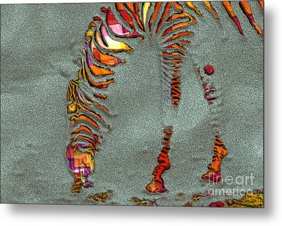 Zebra Art - 64spc Metal Print by Variance Collections