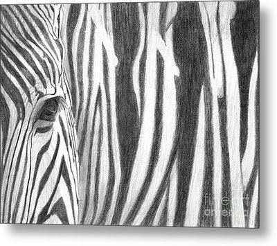 Zebra Metal Print by Denise Deiloh
