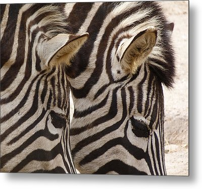 Zebra Double Metal Print