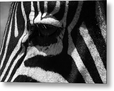 Zebra Eye Metal Print by Aidan Moran