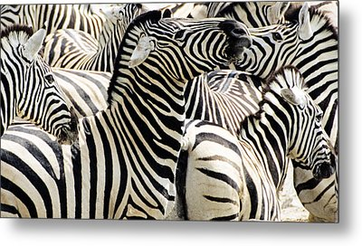 Metal Print featuring the photograph Zebra Gathering by Dennis Cox WorldViews