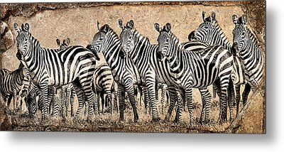 Metal Print featuring the photograph Zebra Herd Rock Texture Blend by Mike Gaudaur