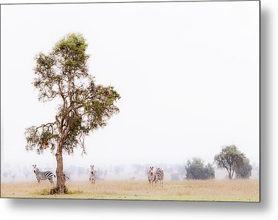 Metal Print featuring the photograph Zebra In The Mist by Mike Gaudaur
