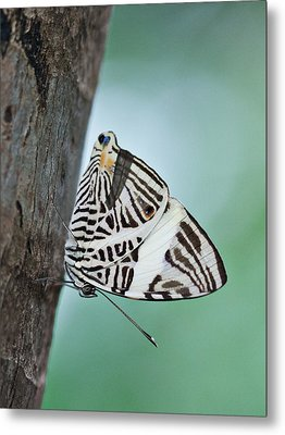 Metal Print featuring the photograph Zebra Mosiac Butterfly by Zoe Ferrie