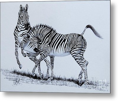 Zebra Play Metal Print