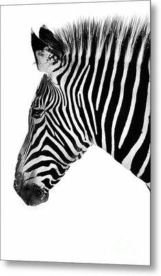 Zebra Profile Black And White Metal Print