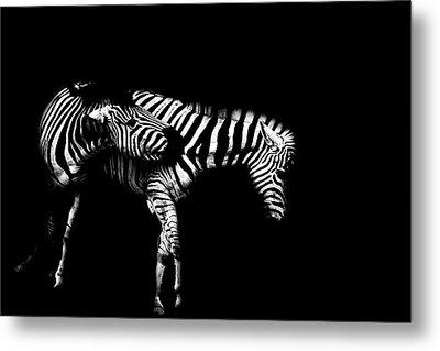 Zebra Stripes Metal Print by Martin Newman
