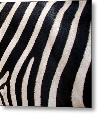 Zebra Stripes Metal Print by Ramona Johnston