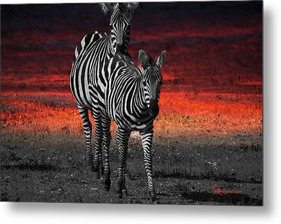 Zebra Train - Featured In Nature Photography - Wildlife And A Place For All Groups Metal Print by EricaMaxine  Price