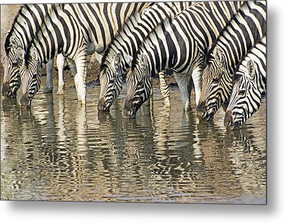 Metal Print featuring the photograph Zebras At Water Hole by Dennis Cox WorldViews