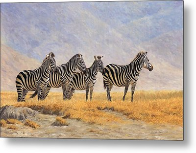 Zebras Ngorongoro Crater Metal Print by David Stribbling
