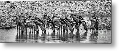Metal Print featuring the photograph Zebras On A Waterhole by Juergen Klust