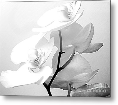 Zen Metal Print by Maureen J Haldeman