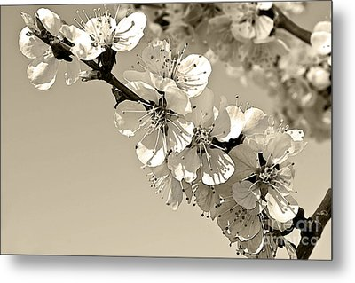 Metal Print featuring the photograph Zen by Sandi Mikuse