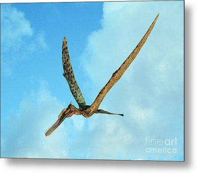 Zhenyuanopterus, A Genus Of Pterosaur Metal Print by Walter Myers