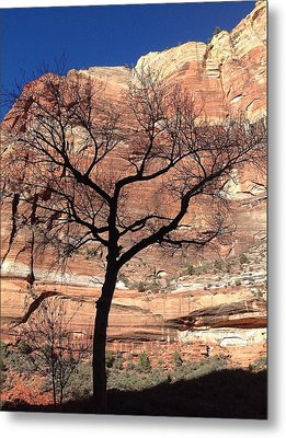 Zion Canyon Tree #2 Metal Print by Feva  Fotos