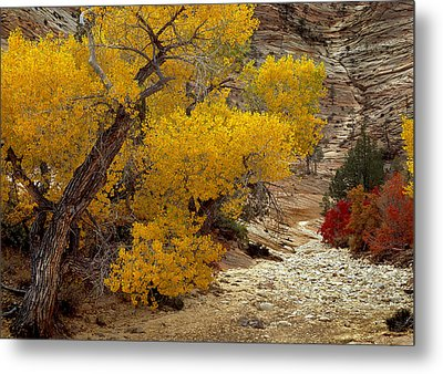 Zion National Park Autumn Metal Print by Leland D Howard