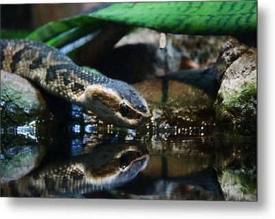 Metal Print featuring the photograph Zoo 039 by Andy Lawless