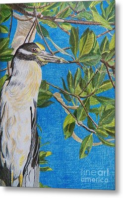 Yellow Crested Night Heron Painting Metal Print by Judy Via-Wolff