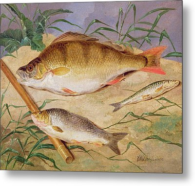 An Angler's Catch Of Coarse Fish Metal Print by D Wolstenholme