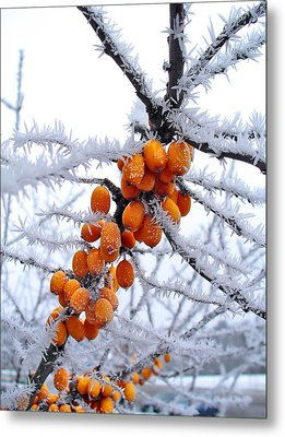 Berries And Frost Metal Print