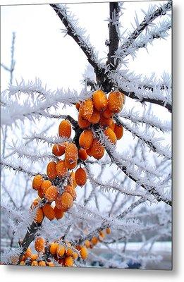 Berries And Frost Metal Print by Aleksandr Volkov