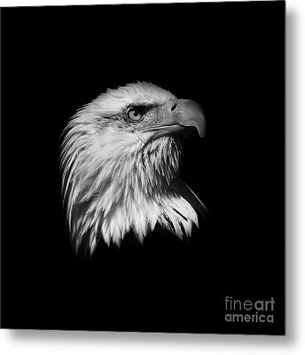 Black And White American Eagle Metal Print by Steve McKinzie