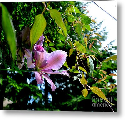 Metal Print featuring the photograph  Clematis Flower by Tanya  Searcy