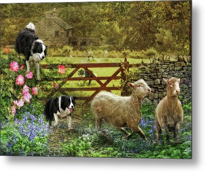 Collecting The Strays Metal Print by Trudi Simmonds