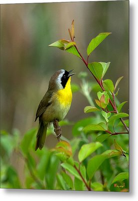 Metal Print featuring the photograph  Common Yellowthroat Warbler Warbling Dsb006 by Gerry Gantt