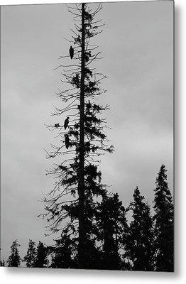 Eagle Silhouette - Bw Metal Print