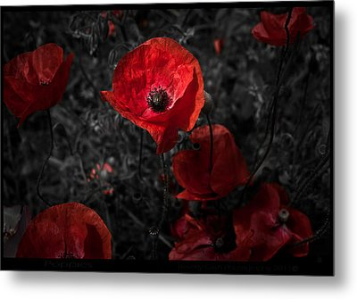 Metal Print featuring the photograph  Poppy Red by Beverly Cash