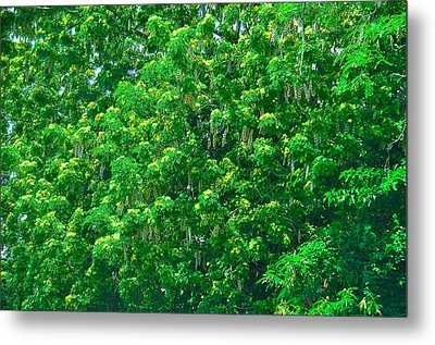Tibit Tree Metal Print by David Alexander