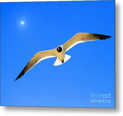 To The Sun And Back Metal Print by Richard Burr